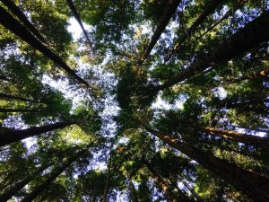 A picture of trees reaching up into the sky