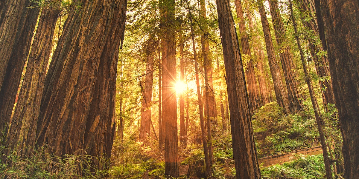Why We Use Redwood to Build Solar Pergolas